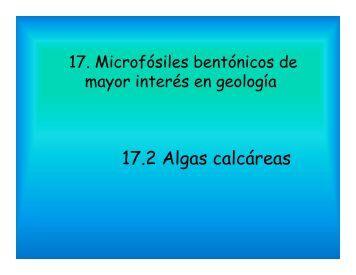 17.2 Algas calcáreas - Aragosaurus