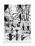 a new species of leclercqia banks, bonamo et grierson (lycopsida) - Page 4