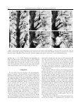 a new species of leclercqia banks, bonamo et grierson (lycopsida) - Page 7