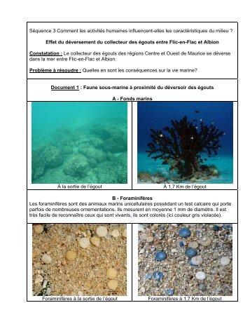 Effet du déversement du collecteur des égouts entre Flic-en-Flac et ...