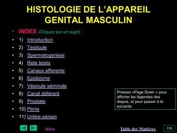 HISTOLOGIE DE L'APPAREIL GENITAL MASCULIN - epathologies