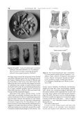 PALAEOLITHIC WHISTLES OR FIGURINES? A ... - Informit - Page 6