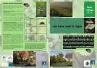 N°4 - Les haies dans la vigne - Chambre d'agriculture du Bas-Rhin