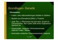 Genetik-Grundlagen