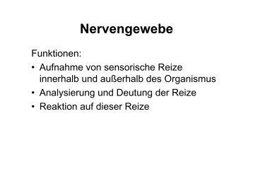 Nervengewebe- Einteilung