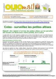 Colza - surveillez les petites altises - Cetiom