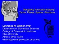 Navigating Anorectal Anatomy: Terms, Planes, Spaces, Structures ...