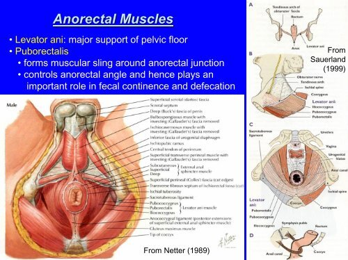 Anorectal