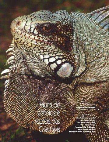 Fauna de anfíbios e répteis das Caatingas - Ainfo