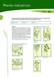 Plantes indicatrices - Prosensols