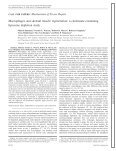 Macrophages and skeletal muscle regeneration: a clodronate ... - Page 2