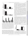 Macrophages and skeletal muscle regeneration: a clodronate ... - Page 7