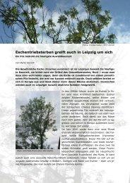 Eschentriebsterben greift auch in Leipzig um sich - Alt.nabu ...