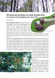 Vorschläge für die Auwaldpflanze 2012 - Alt.nabu-sachsen.de