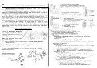 Apiacées (Ombellifères): plantes herbacées ... - Flore du Nord-est