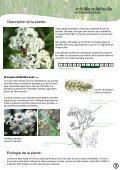 PLATEAU DE L'AUBRAC - Nasbinals - Page 4