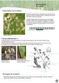 PLATEAU DE L'AUBRAC - Nasbinals - Page 6