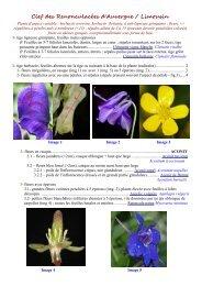 Clef des Renonculacées d'Auvergne / Limousin - Faune Flore du ...