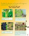Cahier de la vigne CE - Découvre ta Bourgogne - Page 3