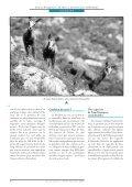 La chasse assistée par ordinateur - Université de Lausanne - Page 7