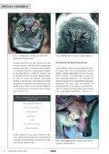 dermatosis faciales caninas - AMVAC - Page 5