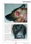 dermatosis faciales caninas - AMVAC - Page 6