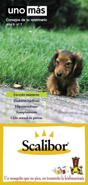 Trichodectes canis signos de diabetes
