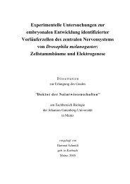 Experimentelle Untersuchungen zur embryonalen ... - ArchiMeD