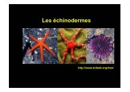 3_echinodermes_grpD2_12