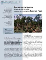 Rongeurs fouisseurs - Bois et forêts des tropiques