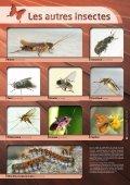5.1 Reconnaissance des différents hyménoptères - Page 2
