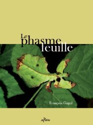 Le phasme feuille - ReGards Bleu ciel bis