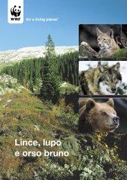 Lince, lupo e orso bruno - WWF Schweiz