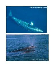 Wale und Delfine - WWF Schweiz