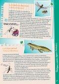Par Gerris Lacustris - Loiret Nature Environnement - Page 7