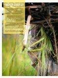 Levende Natur: Oktober 2011 - WWF - Page 2