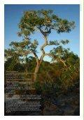 Danmarks rolle i forholD til Den globale proDuktion af soja - WWF - Page 2