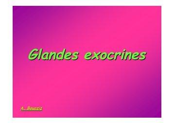 Glandes exocrines