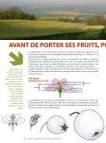 Livret Arbres & Pollinisateurs - Arbre & Paysage - Page 6