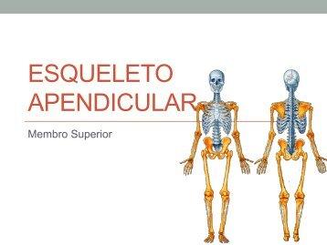Osteologia II (apendicular).pdf - Molar
