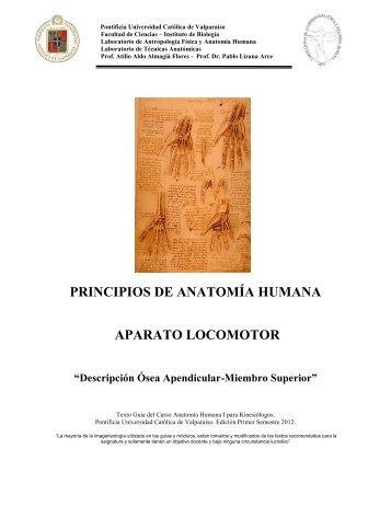 principios de anatomía humana aparato locomotor - Pontificia ...