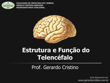Estrutura e Função do Telencéfalo - Dr. Gerardo Cristino