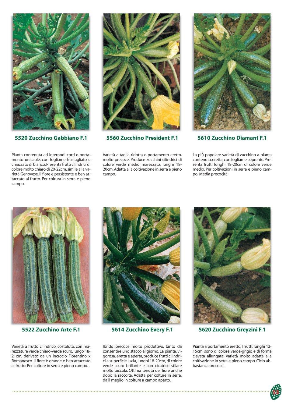 Varietà Zucchine Da Fiore 4 free magazines from foursementi.it