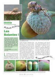 Les balanins / Insectes n° 163 - Inra