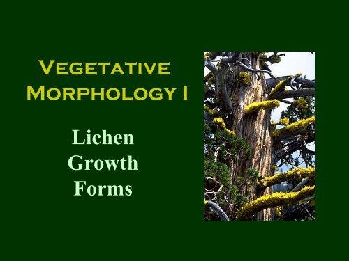 Vegetative Morphology