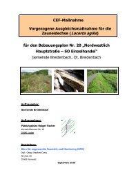 Zauneidechse-CEF-Maßnahme 1 - beteiligungsverfahren-baugb.de