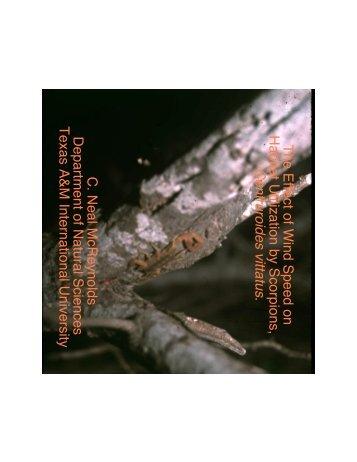 The Effect of Wind Speed onHabitat Utilization by Scorpions ...
