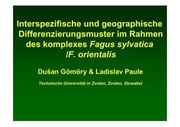Fagus sylvatica - BFW