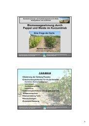 Biomassegewinnung durch Pappel und Weide im Kurzumtrieb - BFW