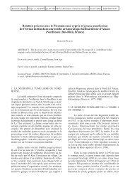 Relation précoce avec le Picenum: une cyprée (Cypraea - Museo ...